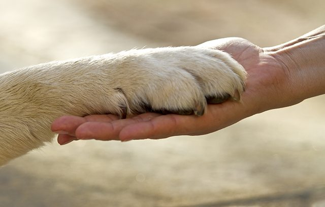 Hand Paw Prayer