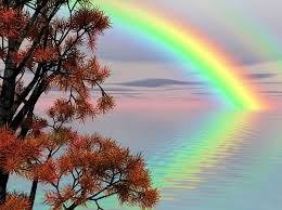 Chico Pit Bull View of Magic Rainbow