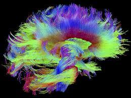 Pit Bull Brain Energy