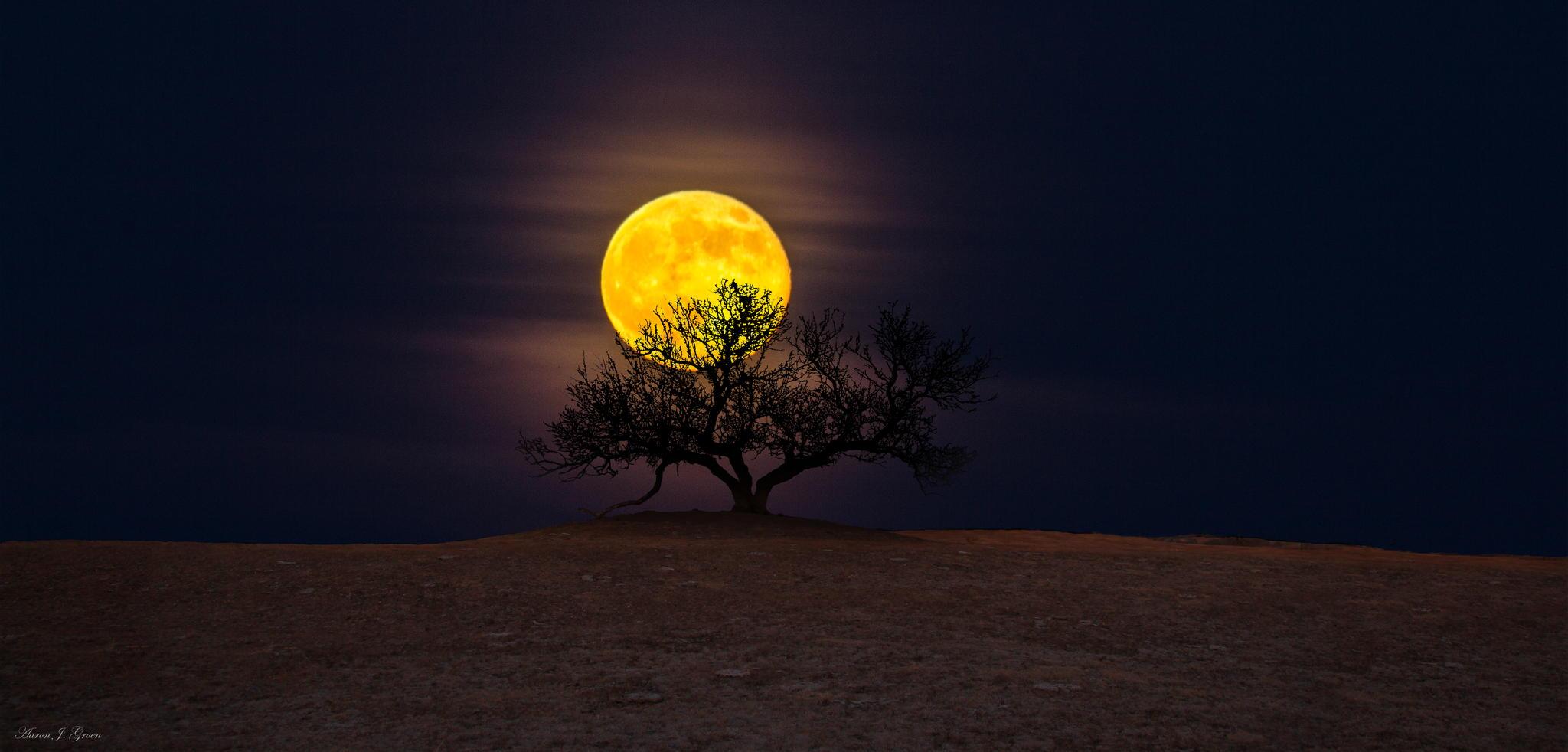 Tree-of-Wisdom-Aaron-J.-Groen